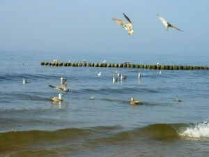 Baltic-Sea-Youth-Philharmonic-w-Polsce